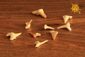 Ząb Rekina - odwaga, zdecydowane działanie, podejmowanie decyzji
